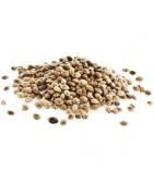 Prodotti Alimentari di Canapa Bio